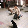 ガーベ僧院の猫芸
